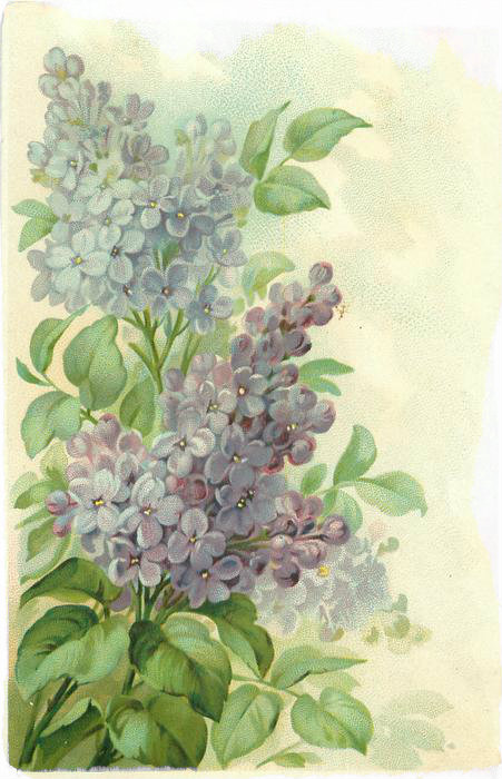 lilacs3.jpg