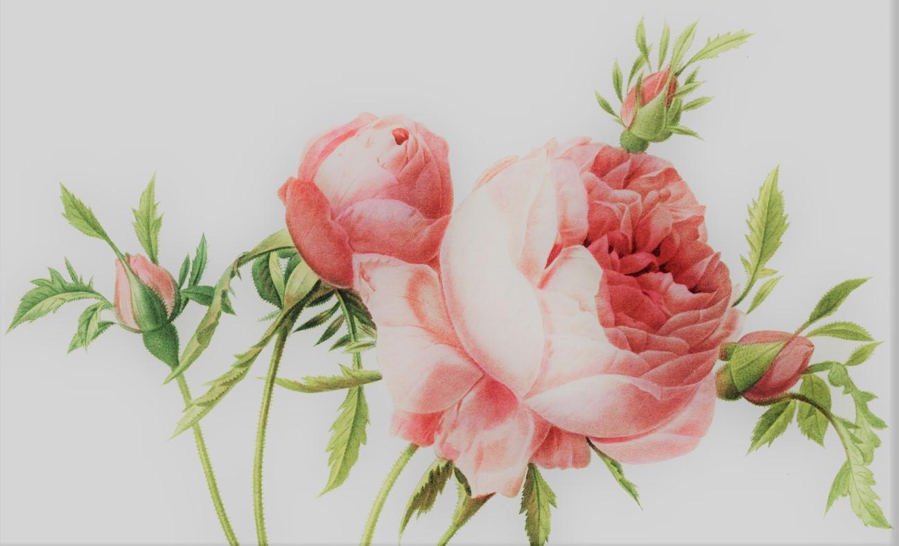 roses-2-.jpg